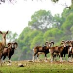 Parque de fauna silvestre Sierra de Cazorla