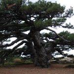 Sierras de Cazorla, un paraiso natural espectacular