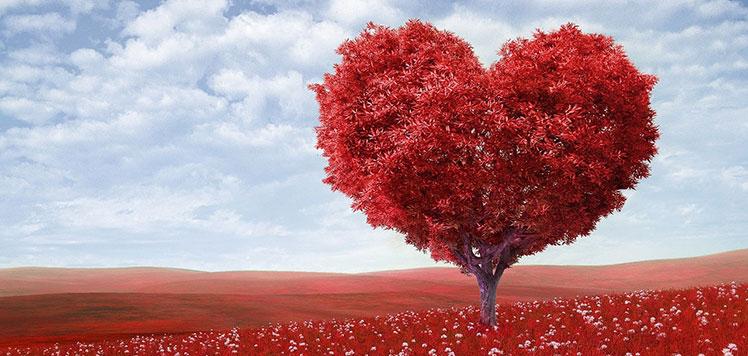 Amor en Cazorla Rural