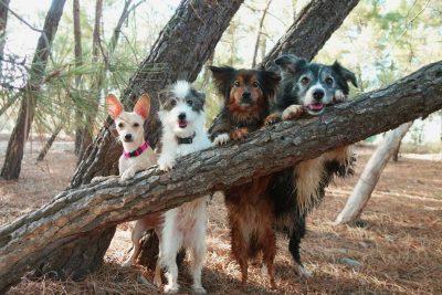 viajar con mascotas a sierras de cazorla