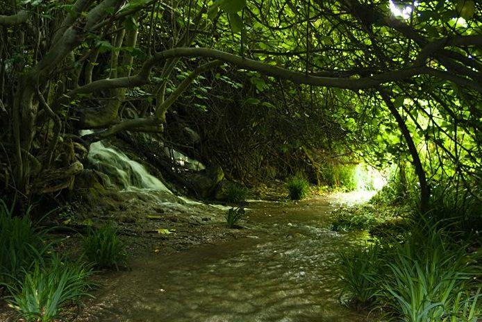 que visitar en sierras de cazorla, ruta por el rio peralta, bosque encantado
