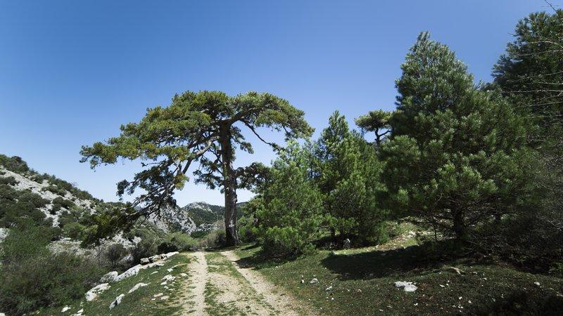 valle de los tejos milenarios en sierra de cazorla